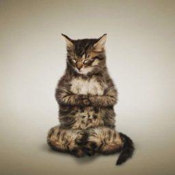 yoga_cats_8